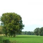 Landschap Geijsteren